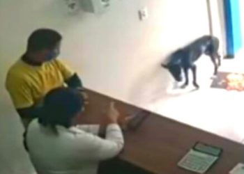 perro callejero pide ayuda en veterinaria