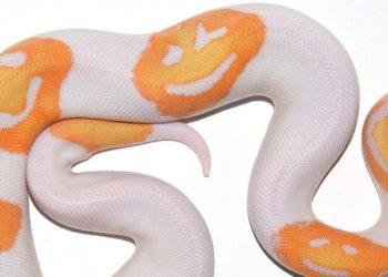 serpiente con caritas en su piel
