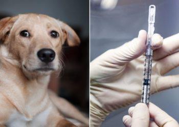 vacuna del COVID-19 para animales