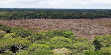 deforestación de bosques tropicales