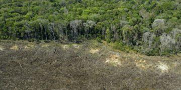 bosque de la Amazonia