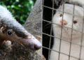 venta de animales salvajes y enfermedades infecciosas