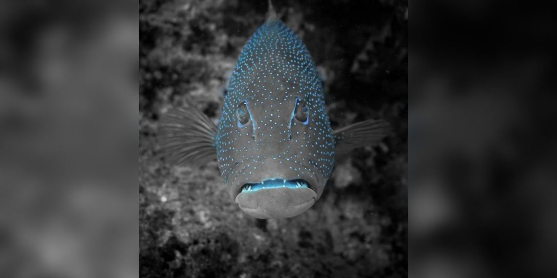extraño pez negro