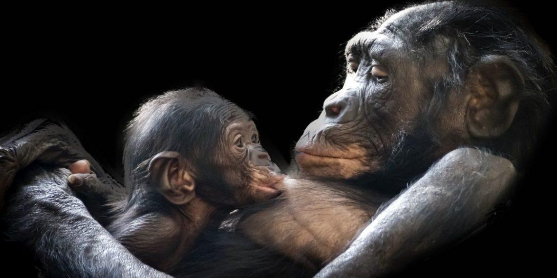 madre gorila en zoológico