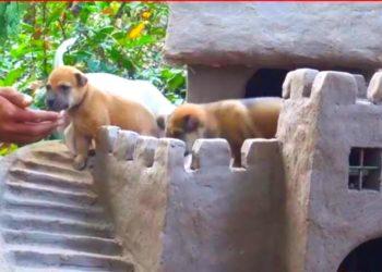 Artesano construye un castillo para cachorros callejeros rescatados.