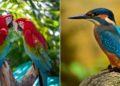 Científicos descubren que hay seis veces más aves que humanos en el planeta