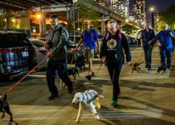 Cazadores de ratas: el escuadrón de perros que lucha contra esta plaga en New York