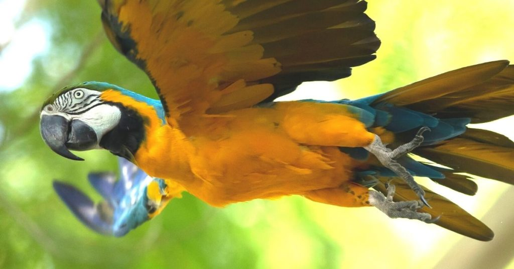 Guacamaya salvaje busca el amor en una ciudad de Brasil.
