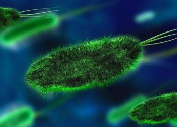 infección de hongo negro en India