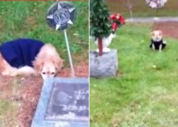 Perrita se niega a abandonar la tumba de su dueña