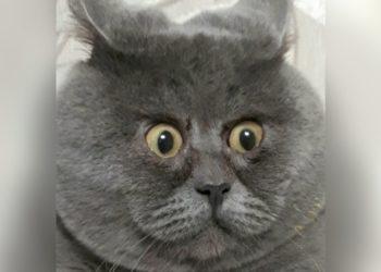 Fedya, gato curiosos gestos