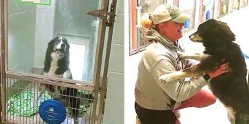 Dueña encuentra a su perra perdida tras recorrer más de 380 kilómetros