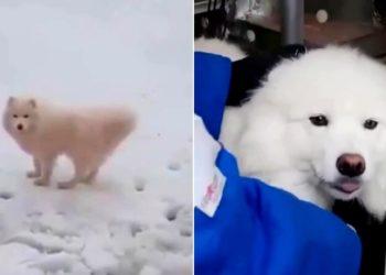 Marineros rusos rescatan a un perro que llevaba más de una semana perdido en el hielo del Ártico