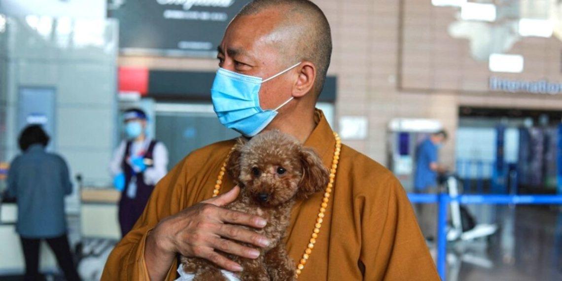 Monje chino salvó de la muerte a 8.000 perros callejeros y ahora los cuida en su templo