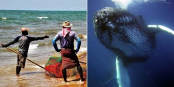 Pescadores se vuelven millonarios al hallar una costosa sustancia en el estómago de una ballena.