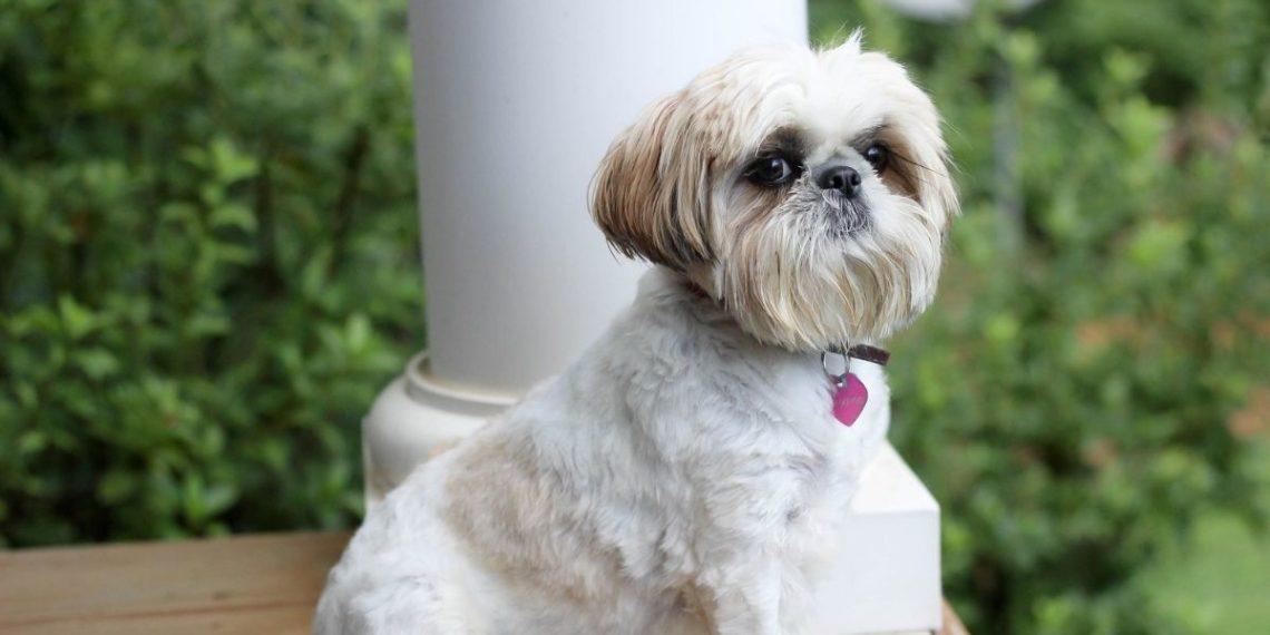 Veterinarios despojan a un perro callejero de más de 3 kilos de pelo