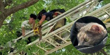Joven intenta bajar a su gato de un árbol y ambos tienen que ser rescatados por los bomberos