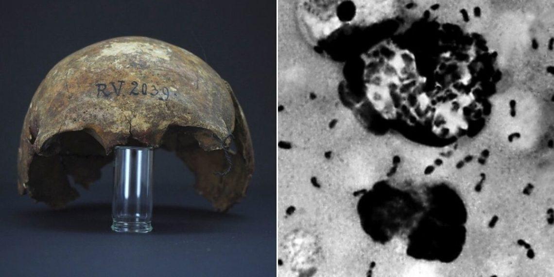Descubren en un esqueleto de 5.000 años la bacteria que causó la peste negra en el mundo.