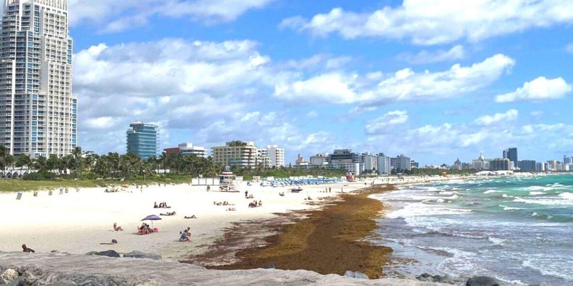 Sargazo, la tóxica alga que se ha convertido en la peor pesadilla para los países del Caribe