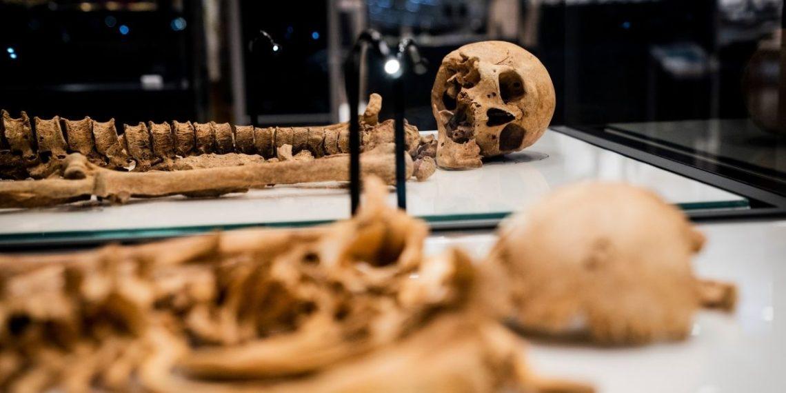 """guerrero vikingo se """"reencuentra"""" con un familiar luego de 1.000 años en un museo"""