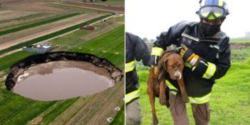 Rescatan a perros del socavón