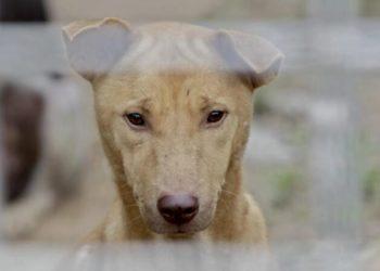 Festival de Yulin: polémica fiesta del consumo de carne de perro en China