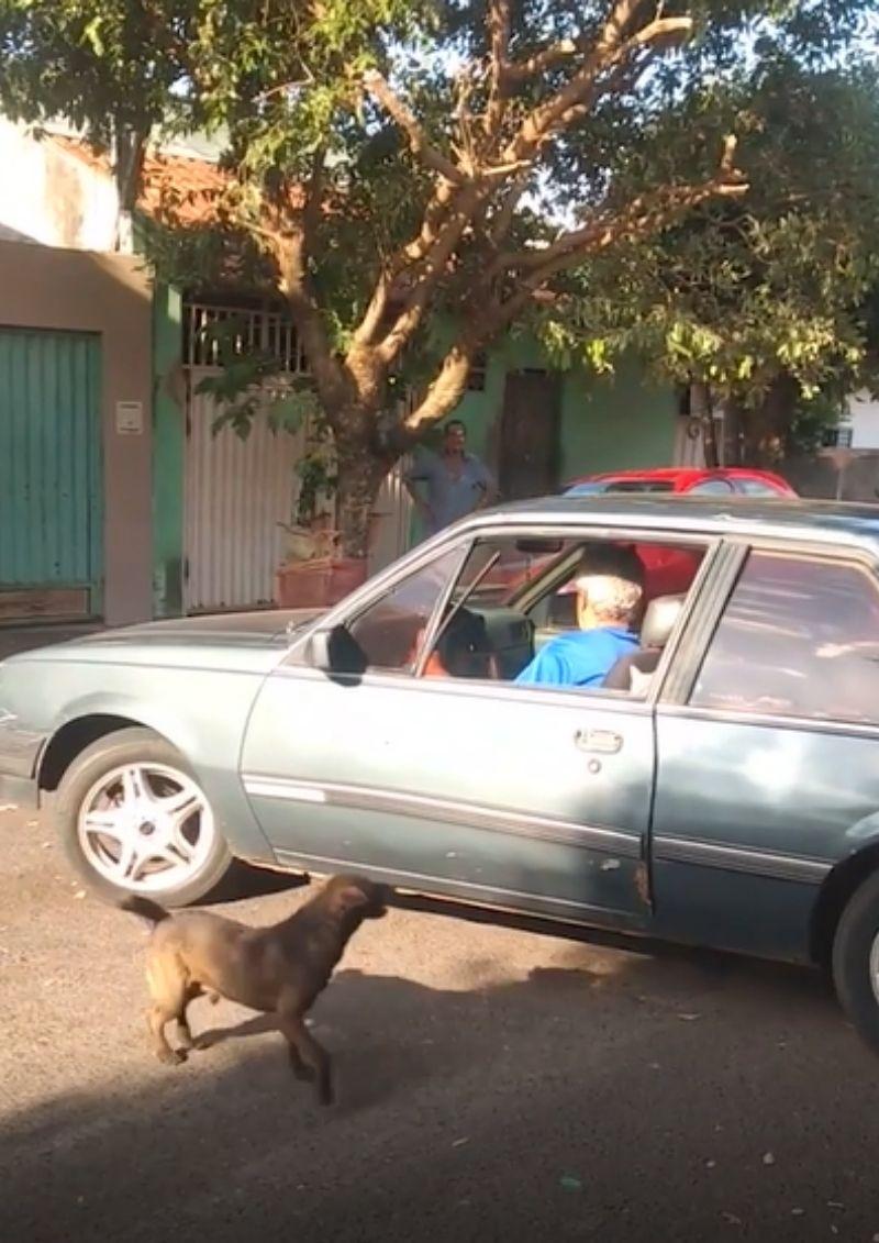 perro ayuda a empujar un auto