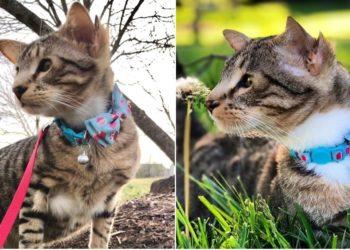 Aslan, el gato nacido con cuatro orejas