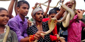 Fiesta de las serpientes, la feria de adoración de estos reptiles en la India