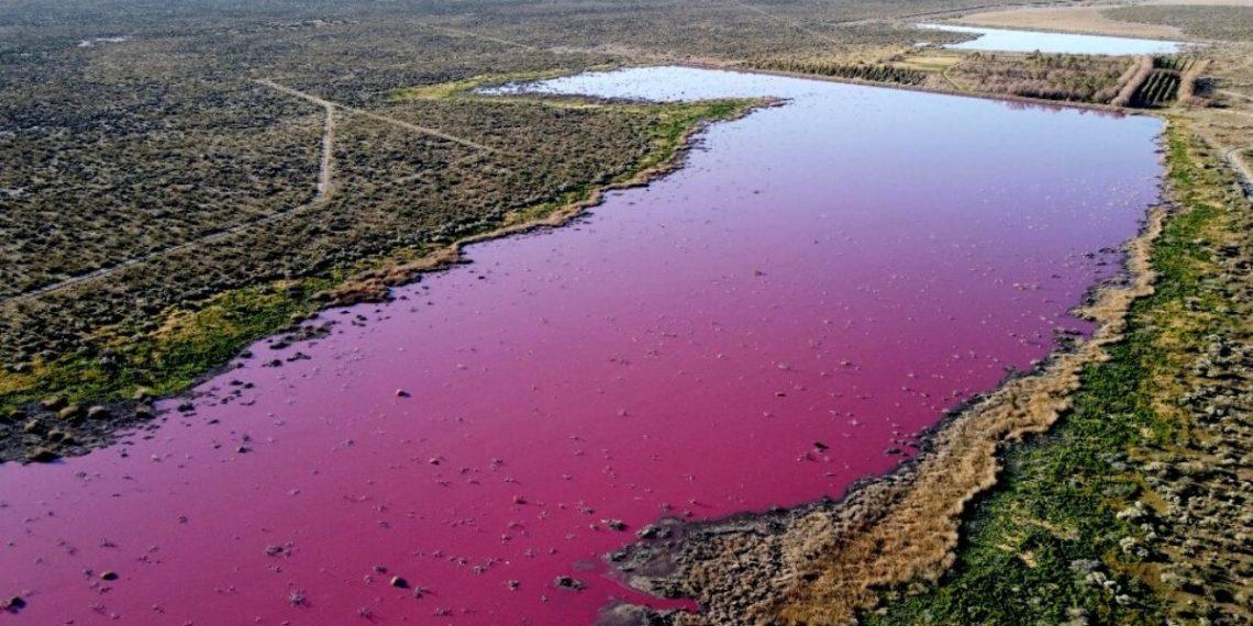 Laguna rosa por la contaminación causa indignación en Argentina