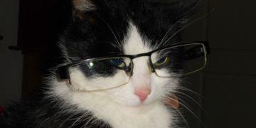 """Truffles, la gata """"oftalmóloga"""" que ayuda a los niños en una clínica"""