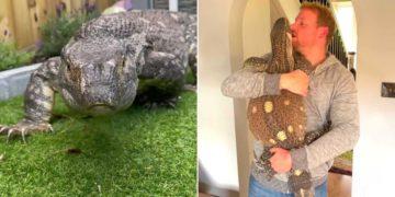 Rex, el enorme lagarto que es tenido como mascota por una familia