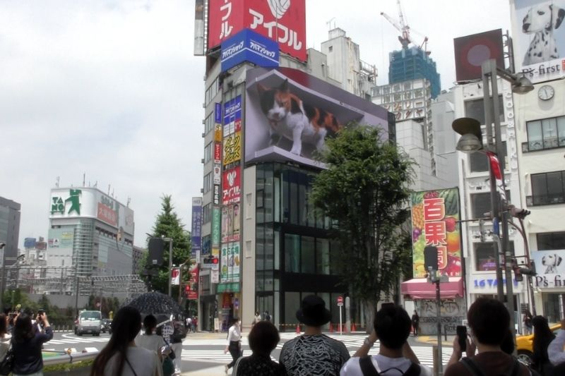 Un gato gigante en Tokio