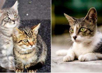Tashirojima, así es la isla de los gatos en donde hay más felinos que personas