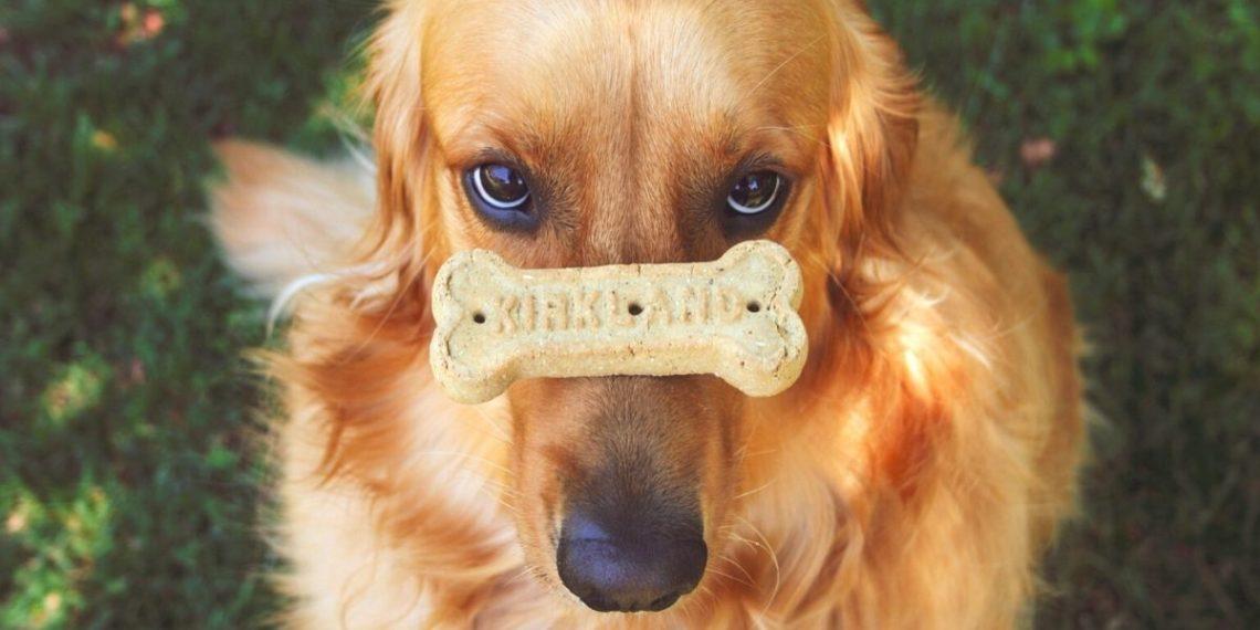 Niño con síndrome de Down fundó exitosa fábrica de galletas para perros