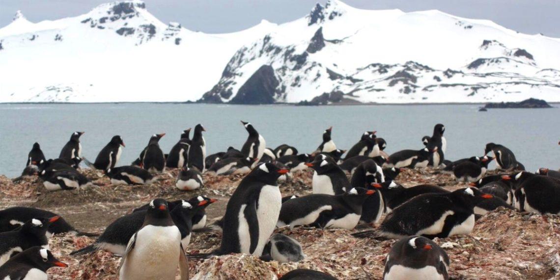 Los microplásticos ya se han convertido en parte de la dieta de los pingüinos en la Antártida