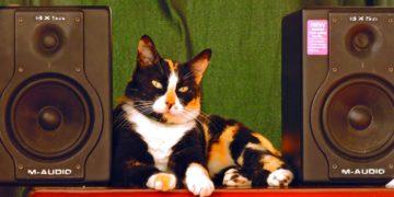 Denuncian fiesta clandestina y descubren que un gato rumbero ponía la música