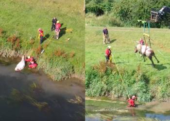 Rescate caballo de un pantano
