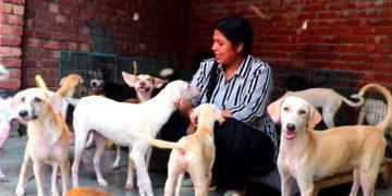 Mujer adopta a 500 perros callejeros en la India