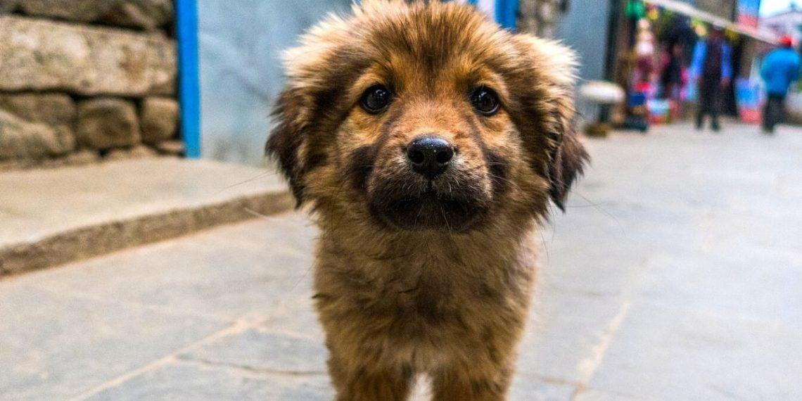 Dueño de restaurante le da comida a perros callejeros que lo visitan brindándoles un menú especial. Foto: Pixabay
